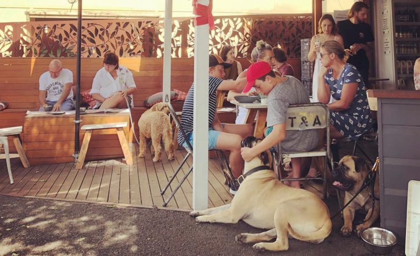 4 Paddington Pet-Friendly Restaurants to Take Your Four-Legged Pals on a Date!